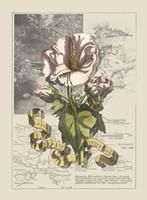 Garden in June III Fine Art Print