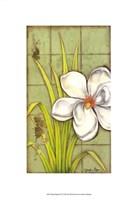 "Sugar Magnolia (P) I by Jennifer Goldberger - 13"" x 19"""