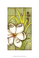 "Sugar Magnolia (P) II by Jennifer Goldberger - 8"" x 14"""