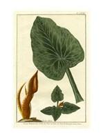 "Botanical by Buchoz II (D) by Pierre-Joseph Buchoz - 11"" x 15"""
