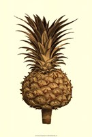 """Sepia Pineapple (H) II by Vision Studio - 9"""" x 16"""" - $12.99"""