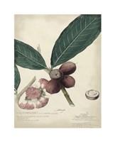 Botanical IV Giclee