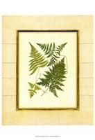 Fern with Crackle Mat  I Fine Art Print