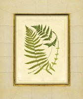 Fern with Crackle Mat (H) III Fine Art Print