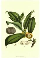 "Exotic Foliage I by Vision Studio - 10"" x 12"""