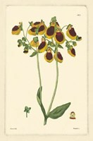 Yellow Curtis Botanical I Fine Art Print