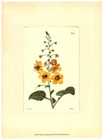 Yellow Curtis Botanical II Framed Print