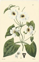 White Curtis Botanical IV Fine Art Print