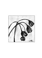 "6"" x 6"" Tulips Pictures"