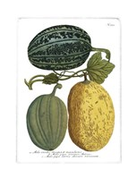 Antique Melons I Fine Art Print