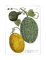 Antique Melons II Fine Art Print