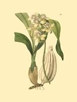 Orchids II Fine Art Print
