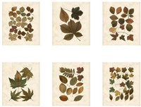 "Lodge Leaf Collection by Chariklia Zarris - 34"" x 17"""