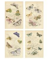 "Jardini Butterflies by Chariklia Zarris - 9"" x 12"""