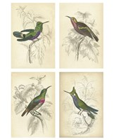 """Jardini Hummingbirds by Chariklia Zarris - 10"""" x 13"""""""