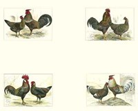 "Miniature Roosters by Chariklia Zarris - 10"" x 8"""
