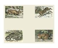 """Micro Bunnies by Chariklia Zarris - 10"""" x 8"""""""