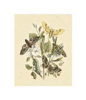 "Natures Delicate Gathering II by Chariklia Zarris - 7"" x 8"""