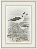 """Winged Stilt by F.W. Frohawk - 13"""" x 17"""" - $12.99"""