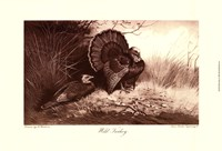 Wild Turkey Fine Art Print