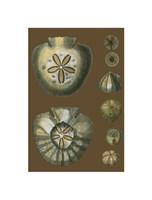 "Shells on Cocoa II by Chariklia Zarris - 6"" x 9"""