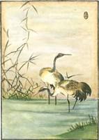 Oriental Cranes II Fine Art Print
