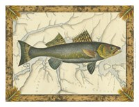 """Walleye on Map by Vision Studio - 12"""" x 9"""", FulcrumGallery.com brand"""