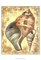 """Sand and Shells II by Vision Studio - 13"""" x 19"""""""