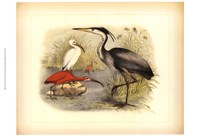 Heron & Ibis Fine Art Print