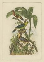 "Exotic Birds II by Vision Studio - 6"" x 9"""