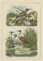 "Exotic Birds III by Vision Studio - 6"" x 9"""
