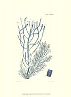 Shades of Aqua III Framed Print