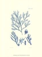 Shades of Aqua IV Framed Print