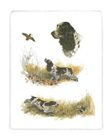 Cocker Spaniel Fine Art Print