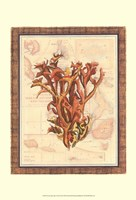 Exotic Map with Coral II (D) Fine Art Print