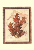 Exotic Map with Coral III (D) Fine Art Print