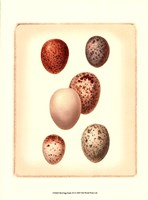 Bird Egg Study III Fine Art Print