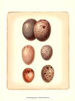 Bird Egg Study IV Fine Art Print