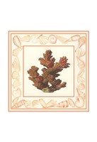 """Coral with Shell Border II by Vision Studio - 11"""" x 11"""", FulcrumGallery.com brand"""