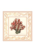 """Coral with Shell Border IV by Vision Studio - 11"""" x 11"""", FulcrumGallery.com brand"""