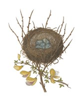 Antique Bird's Nest II Fine Art Print