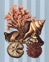 """Shell and Coral on Aqua I by Vision Studio - 13"""" x 19"""""""