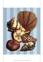 """Shell and Coral on Aqua II by Vision Studio - 13"""" x 19"""""""