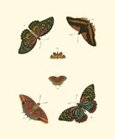 "Butterfly Study II by Pieter Cramer - 7"" x 9"""