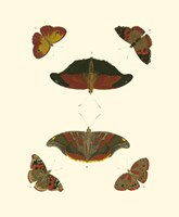 "Butterfly Study III by Pieter Cramer - 7"" x 9"""
