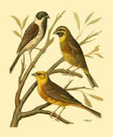 Domestic Bird Family I Fine Art Print