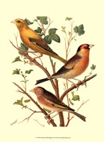 Domestic Bird Family VI Fine Art Print