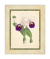 Orchid I Giclee