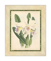 "Orchid II by Walter H. Fitch - 16"" x 20"""