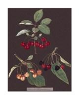 Cherries Giclee
